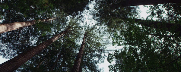 PLANETARY - TREES